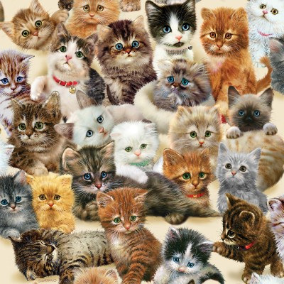 Bluebird-Puzzle - 500 Teile - Kittens for the Taking